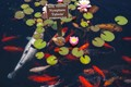Lot of Fishes