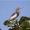 Bird Tadoba