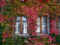 window in the autumn