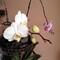 orquidea_1a