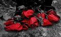 Yesterday Roses