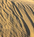 Bugs in sand dune