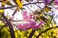 Spring Blossom!