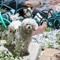 lovely poodle, lovely Nikon 75-150/3.5