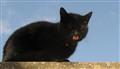 Mojito my cat