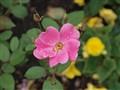 Tiergarten Blossoms