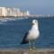 gull11-3-14  7072 (1 of 1)