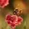Pollenface