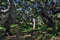 Los Osos Oaks Reserve