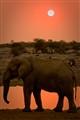 An african evening
