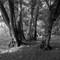 Ancient woodland, Dorset