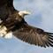 Eagle-3701