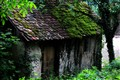 old house, green roof