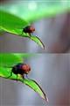 Fly1-vert