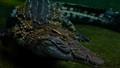 crocs 4 pose