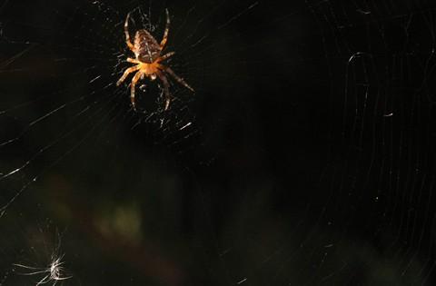 Spider Refined