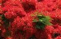 fiery red, bursting green