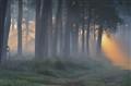 Deelen Forest (Deelerwoud) Arnhem, NL