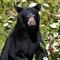 20050903-30-Bear