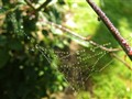 A Web of Dewdrops