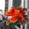 Windowbox Flower 3