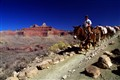 Donkeys at work to supply the phantom ranch