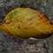 a single yellow leaf