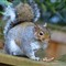 IMG_0255_squirrel_reszd