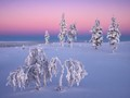 Light of mid winter