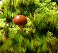 Fungi among the moss - Cropped