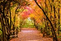 Path to Autumn