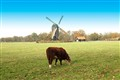 The Dutch Autumn Scenery