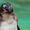 2013-08-15 - Jurong Bird Park-3248