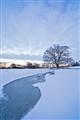 Frozen Rhine