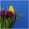DSC01648_DxO_rawc (2)