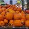 Pumpkin Service