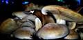multi fungi