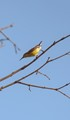 Big year Birds- Purple Sun bird -resting