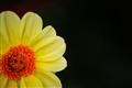 Corner flower