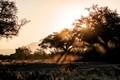 Morning Dust, Hwange National Park