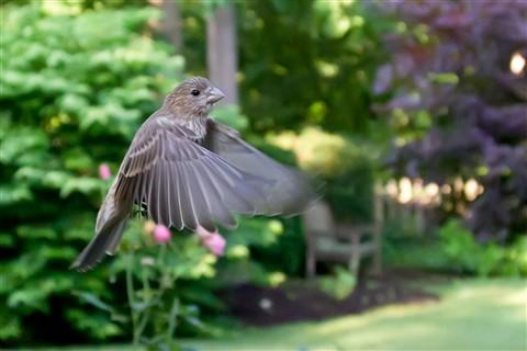 2011-06-20 birds5 095-Edit