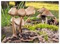 mushrooms on rotten wood