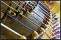 Harp Irish