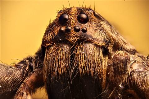 spider2_web