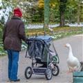 Goose meets Baby