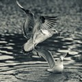 City Park Seagull
