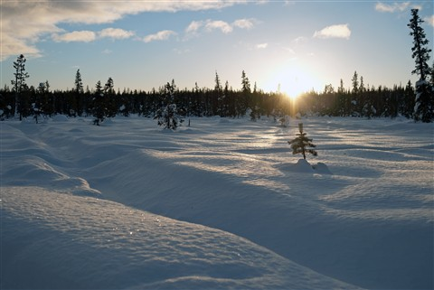 Valley of the River Torne: The view from the dog sled.