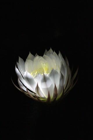 Cardón en floración - Mario Albarracín