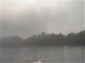DSC08070 Morgenstimmung am Rhein