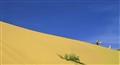 Sand dune, bedouin, camel